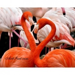 Картина по номера - Американски фламингота