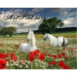 Картина по номера - Бели коне сред маковете